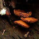 Mushroom in the wild by Elisabeth Dubois