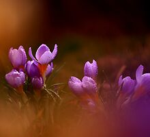 Photo of beautiful wild flowers by Balazs Kovacs