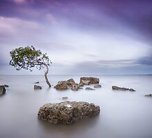 Windswept, Deception Bay, Queensland, Australia by Aaron  Bishop