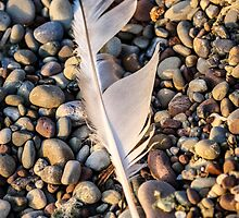Feather on the Rocks by Mikell Herrick