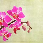 Orchids by Fern Blacker
