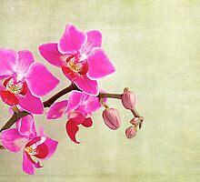 Orchids by fernblacker