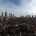 Corn Field by Dan Seeley