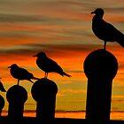 Sunset Pose by Heather  Andrews Kosinski