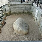 Plymouth Rock by Ren Provo