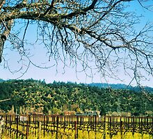 Napa, California by NancyC