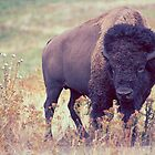 The Buffalo by shifty303