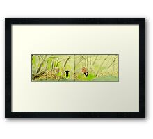 cows crossing a creek Framed Print