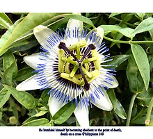 "PASSION FLOWER  / BIBLE VERSE ""UNTO DEATH"" by Shoshonan"