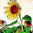 Sunflower 12 by artbyjames