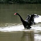 Black Swan by bratpyle