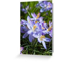 Crocus Flowers Greeting Card