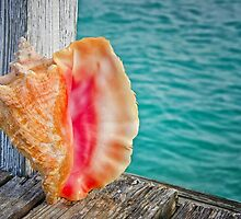 Conch Shell on Dock by Rashad Penn