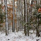 Arkansas Wintering Stix by NatureGreeting Cards ©ccwri