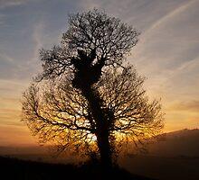 Lone tree sunset silhouette by peteton