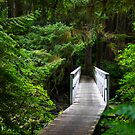 Bridge on San Josef Bay Trail, Cape Scott, British Columbia by CarrieCole