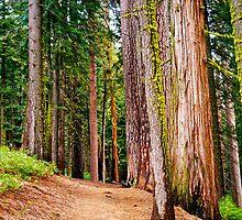 Yosemite National Park by ADayToRemember