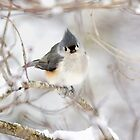 Titmouse bird snowy branch winter iPhone case by RobTravis