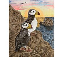 Puffins on Sunset Cliff Photographic Print