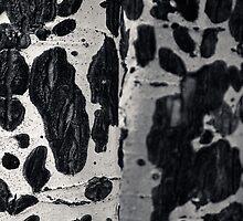 Aspen Bark by Joel Meaders
