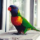 Rainbow Lorikeet on the Sill by mrsperrino