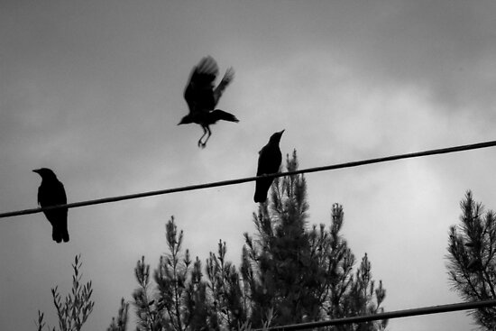 Birds on a Wire by Elle Newlands