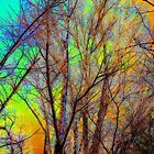 Stained Glass Trees by Winona Sharp