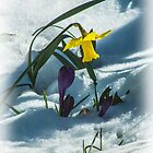 Spring flowers in the snow by bratpyle
