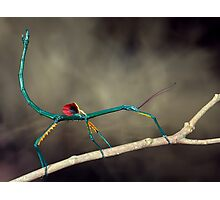 Stick insect Photographic Print