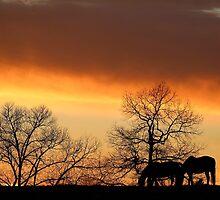 Sunset Serenity by BerryvineImage