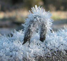 Icy Portal by wildwoosi