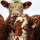 Heifers II by EelhsaM