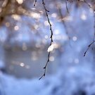 Snow dazzle by LadyFi