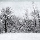 Winter Wonders by Kathilee