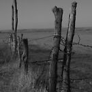 Country Fence by Dan Seeley