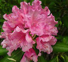 Azalea beauty by MarianBendeth