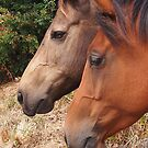 Two horses in Paddock. by Esther's Art and Photography