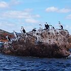 Cormorants. This rock is taken.  by Esther&#x27;s Art and Photography