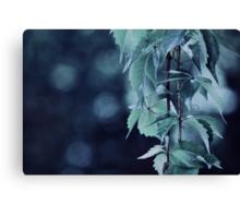 Indigo Evening Canvas Print