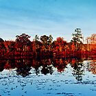 Reflections of Fall by djphoto