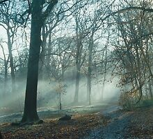 Mist In The Woods 3 by Robbie Patterson