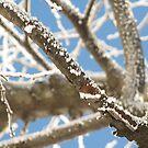 Crisp Branches by M-EK