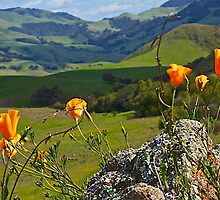 Poppies and Foothills by John Butler