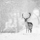A Stag In The Snow by Patricia Jacobs CPAGB LRPS BPE2