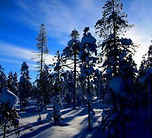 Swedish Taiga by David McGilchrist