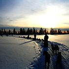 Sledding in Lapland by David McGilchrist