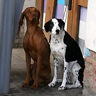 Two dogs in Barcelona by Segalili