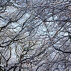 Snowed Branches by Xoanxo