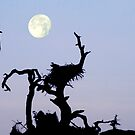 EAGLES & FULL MOON by TomBaumker