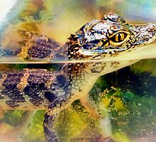 Chinese Alligator by missmoneypenny